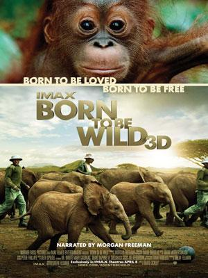 Affiche Born to Be Wild 3D