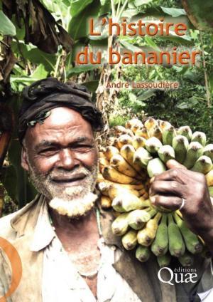 Affiche L'histoire du bananier