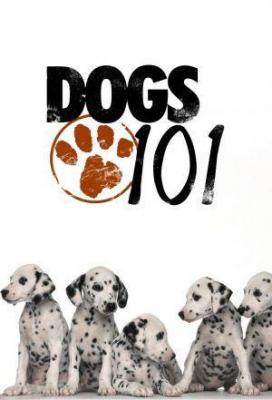 Affiche Dogs 101