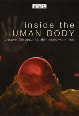 Affiche Inside the Human Body