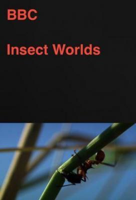 Affiche Insect Worlds