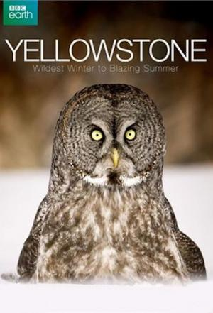 Affiche Yellowstone: Wildest Winter to Blazing Summer