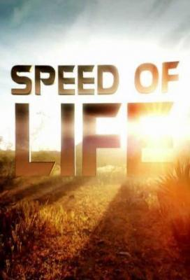 Affiche Speed of life