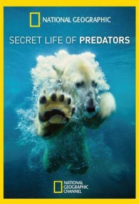 Affiche Secret Life of Predators