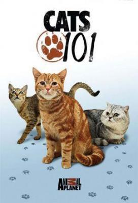Affiche Cats 101