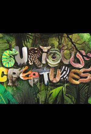 Affiche Curious Creatures
