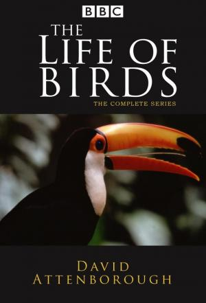 Affiche The Life of Birds