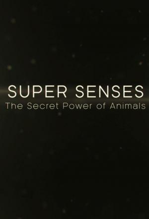 Affiche Super Senses: The Secret Power of Animals