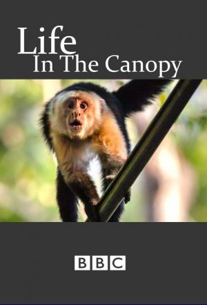 Affiche Life in the Canopy