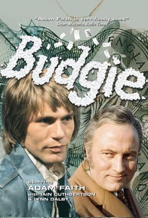 Affiche Budgie
