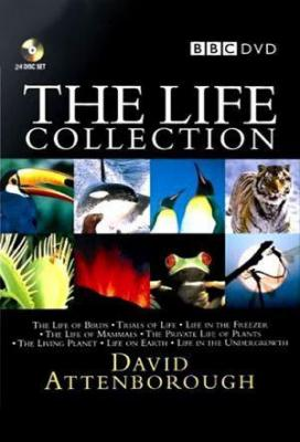 Affiche The Life Collection