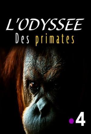 affiche L'odyssée des primates