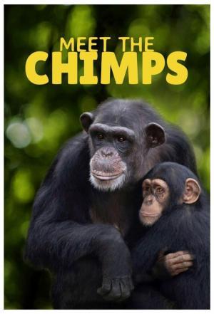 affiche Rencontre avec les chimpanzés